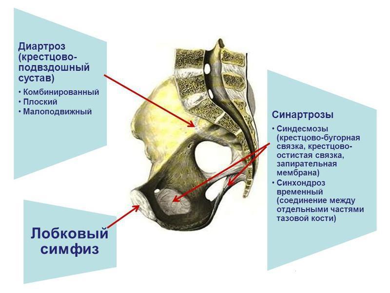Основные причины послеродовой болезненности в костях таза