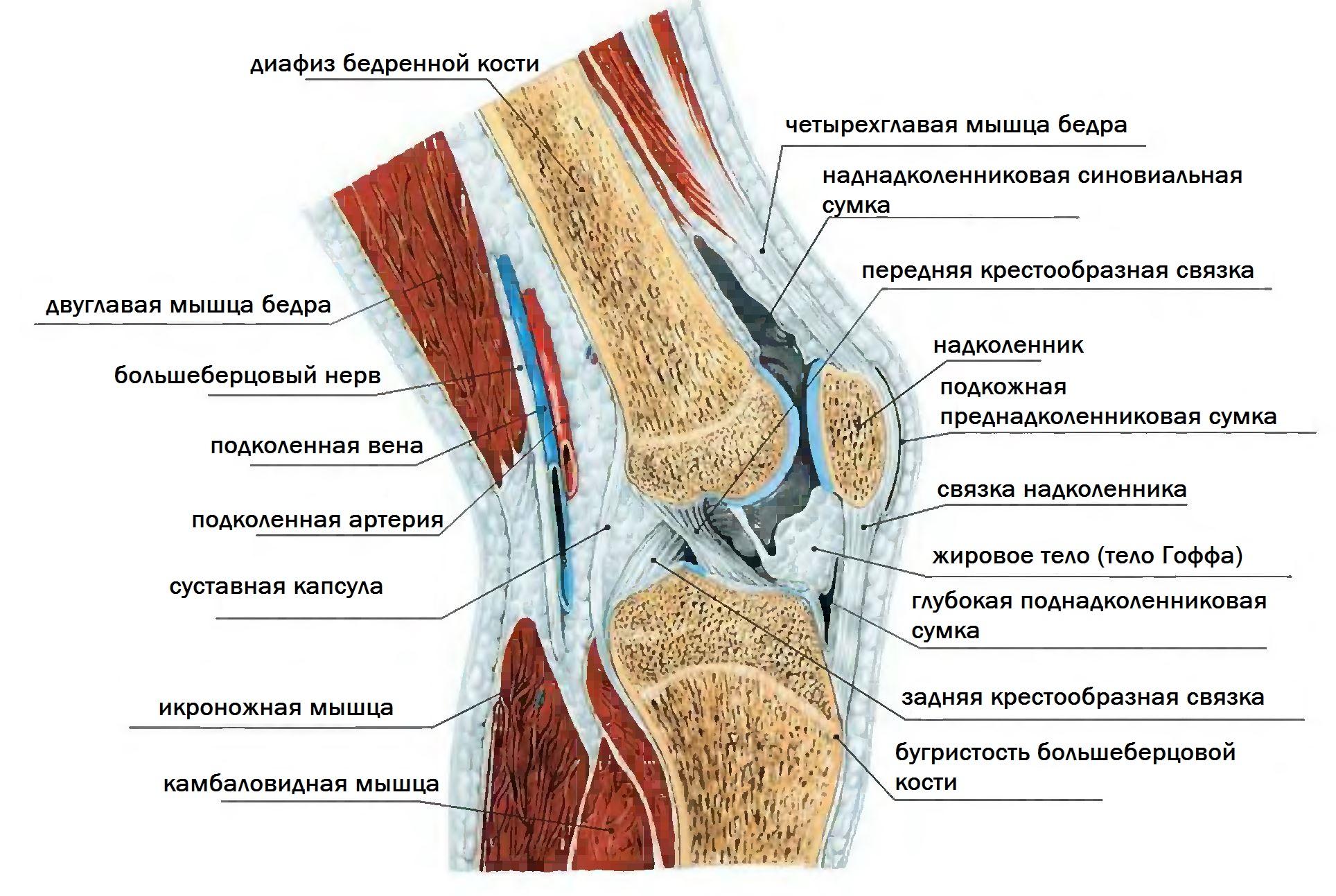 картинки складок колена добавлять