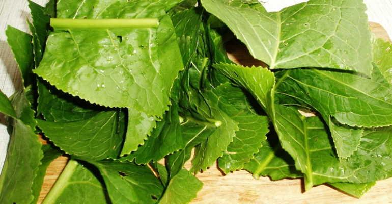 Все о пользе листьев хрена при остеохондрозе