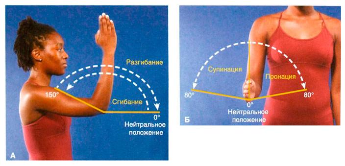 Диагностика и лечение контрактуры локтевого сустава после перелома