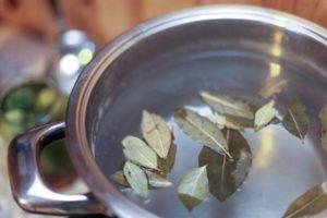 Описание и эффективность лечения остеохондроза лавровым листом
