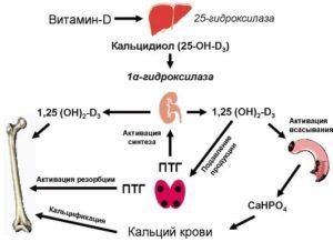 Особенности действия препарата Хондроитин на суставы