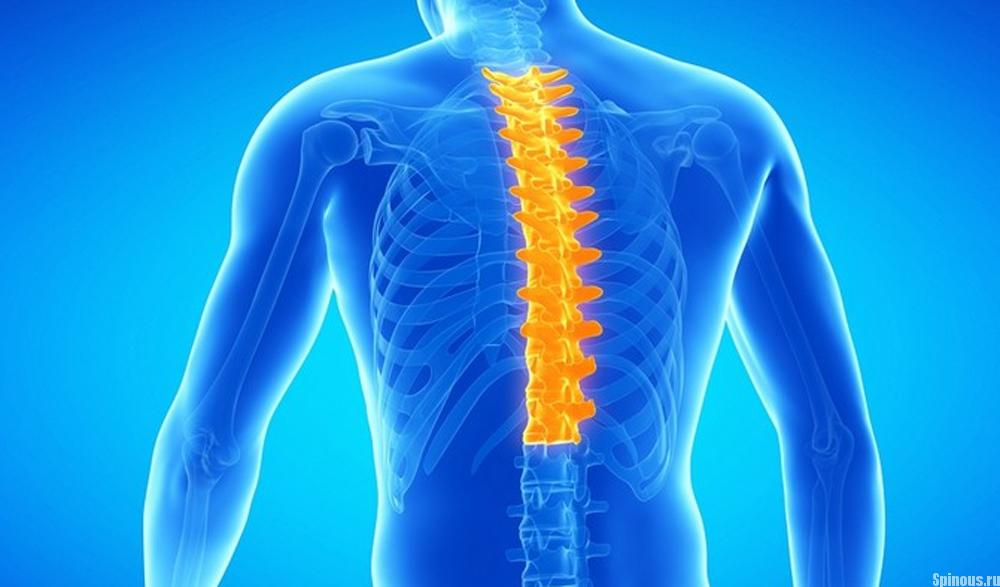 Симптоматика и лечение радикулита грудного отдела